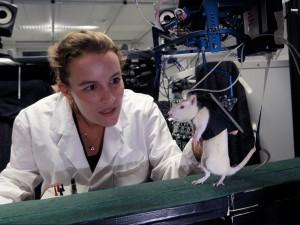 Une chercheuse réapprend à marcher à un rat